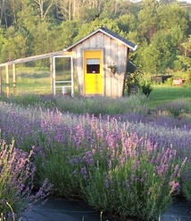 Books, Writers, and Lavender Lovers – Weam Namou